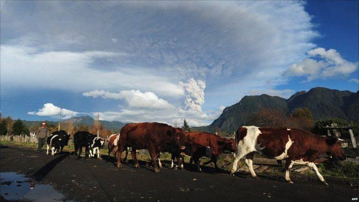Erupcja wulkanu Puyehue 9