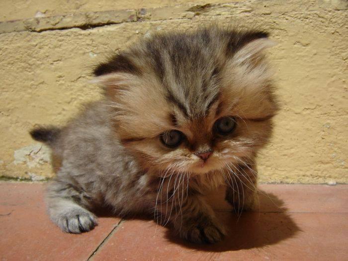 Słodkie kociaki 25