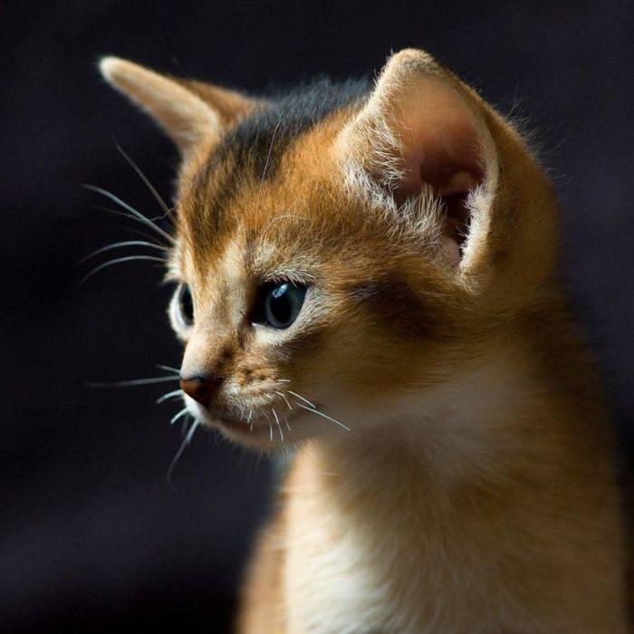 Słodkie kociaki 49