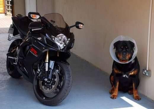 Psy na motocyklach 3