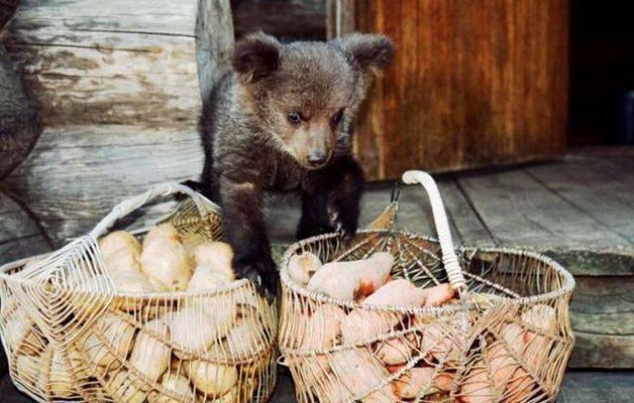Porzucony niedźwiadek 12