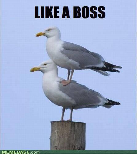 Jak boss #2 14