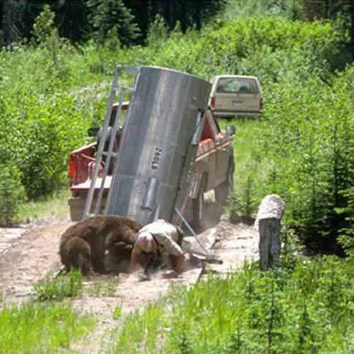 Zemsta niedźwiedzia 7