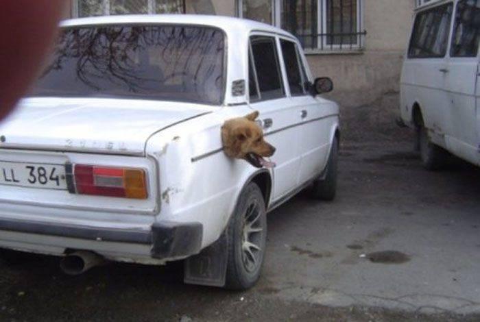 Zabawne zdjęcia psów 19