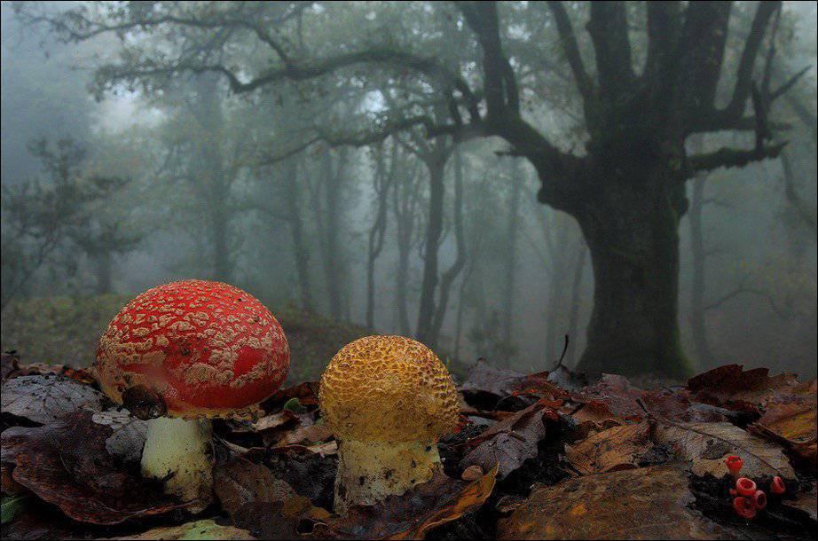 Barwy jesieni #2 34