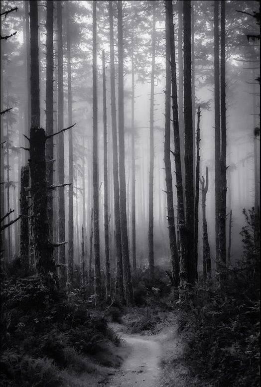 Tajemnicze lasy 22