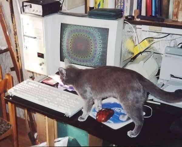 Koty i PC 20