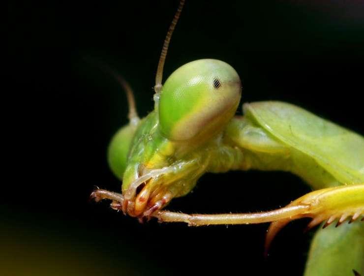 Makrofotografia - owady 40