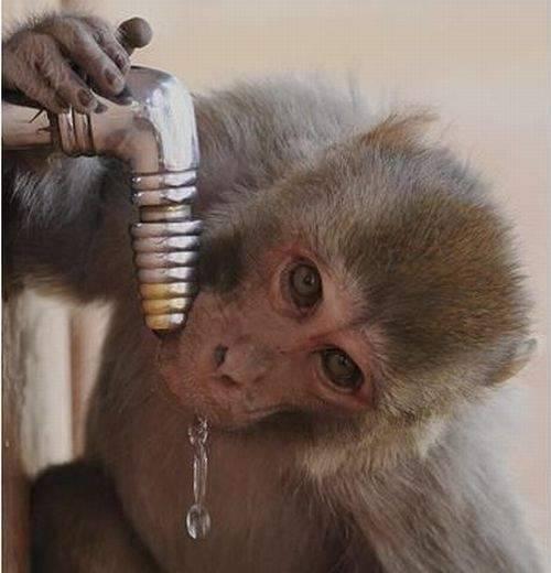 Śmieszne zdjęcia zwierząt #4 39