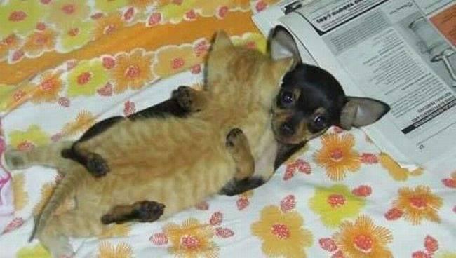 Śmieszne zdjęcia zwierząt #4 2