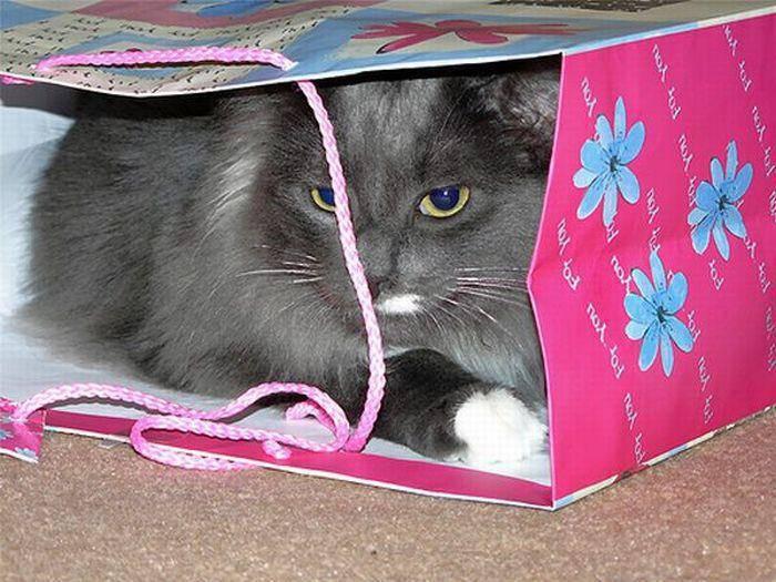 Jak przechowywać kota 11