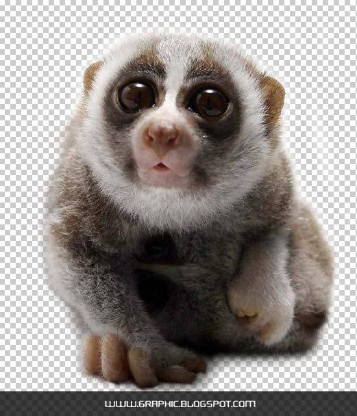 Animal Fur using Photoshop