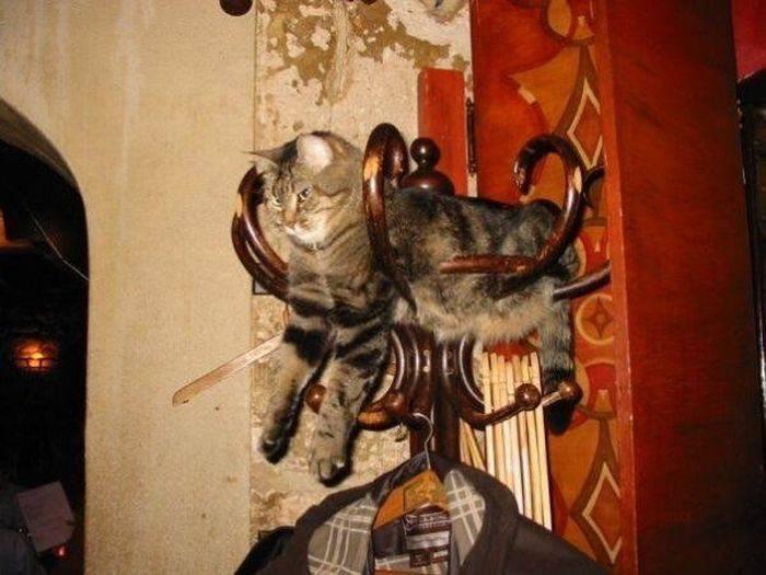 Wyluzowane koty 5