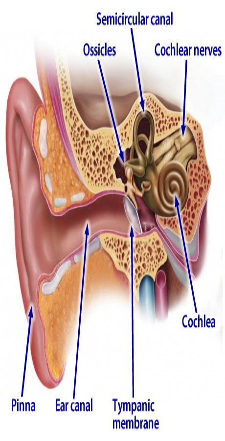 Holistic Tinnitus Treatment