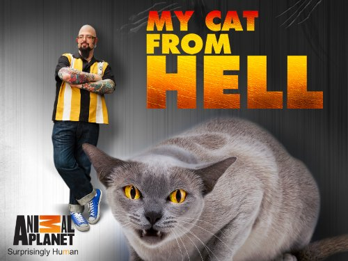 My Cat From Hell S10E12 Phillys Forgotten Cats 720p WEB x264-CAFFEiNE