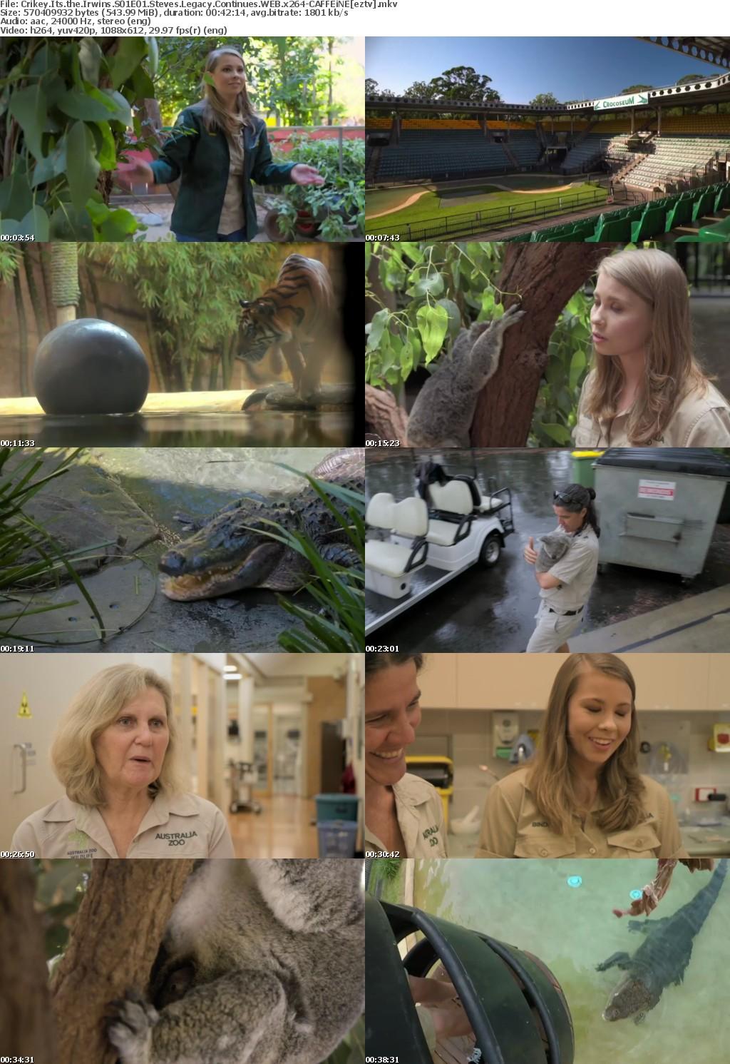 Crikey Its the Irwins S01E01 Steves Legacy Continues WEB x264-CAFFEiNE