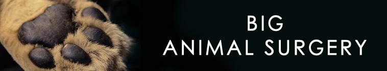 Big Animal Surgery S01E01 Lion 720p HDTV x264-UNDERBELLY