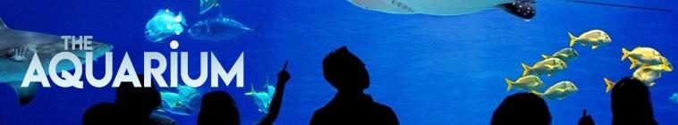 The Aquarium S01E05 Ophelia the Octopus WEBRip x264-CAFFEiNE