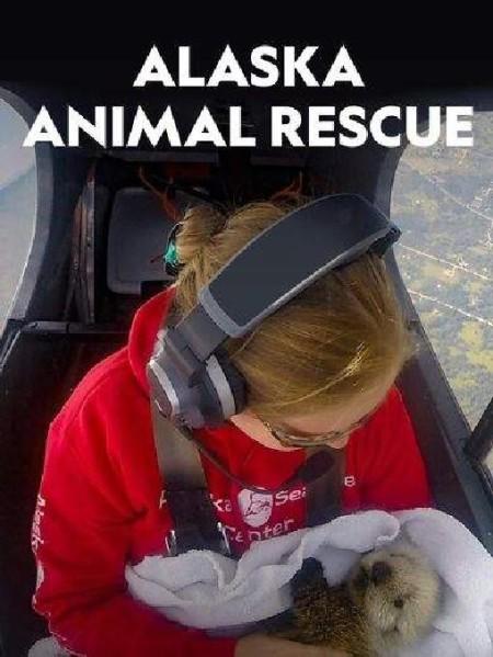 Alaska Animal Rescue S01E02 Wolf Watch 720p WEB x264-CAFFEiNE