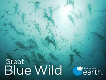Great Blue Wild S01E01 Socorro 720p WEB h264-CAFFEiNE